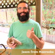 Thank You Jason From Moorooka For Carpet Cleaning Review